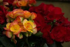Flowers. Pleasant aromas, bright colors, unusual shapes. Mood of summer, tenderness and calm Royalty Free Stock Image