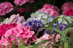 Flowers. Pleasant aromas, bright colors, unusual shapes. Mood of summer, tenderness and calm Stock Image