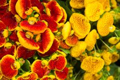Flowers. Pleasant aromas, bright colors, unusual shapes. Mood of summer, tenderness and calm Stock Photography
