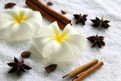 Flowers of plumeria with stars of anise and cinnamon sticks on the white background. Stock Photography
