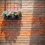 Flowers pod on brick wall Royalty Free Stock Photography