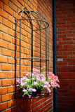 Flowers pod on brick wall Royalty Free Stock Photos