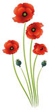 Flowers, poppies Royalty Free Stock Images