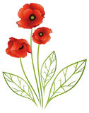 Flowers, poppies Royalty Free Stock Image