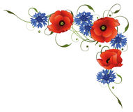 Flowers, poppies, cornflowers Stock Image