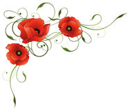 Flowers, poppies, tendril. Elegant tendril with poppies, green and red Stock Image