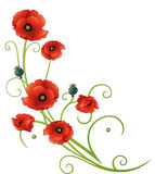 Flowers, poppies, tendril. Tendril with poppies, green and red Stock Images