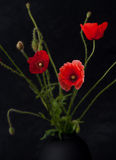 Flowers poppies in a vase Royalty Free Stock Image