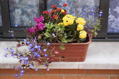 Flowers on the porch Royalty Free Stock Images