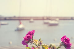 Flowers in the port Stock Photography