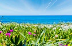 Flowers in Porto Tramatzu beach Stock Image