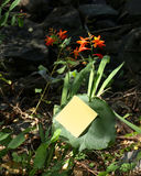 Flowers and post-it. Yellow post-it and flowers Royalty Free Stock Photos