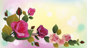 Flowers , postcard . Royalty Free Stock Photo