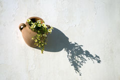 Flowers pot Stock Images