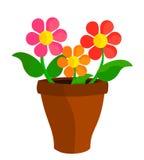 Flowers in pot Stock Photos