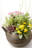 Flowers in the pot Stock Images