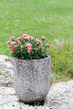 Flowers in a pot. Stock Photography