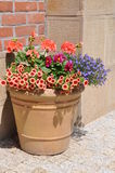 Flowers in the pot on brick wall Royalty Free Stock Images