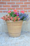 Flowers in the pot on brick wall. Background Stock Photography