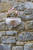 Flowers in pot on brick wall, Stock Photos