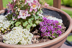 Flowers in a Pot Stock Photography