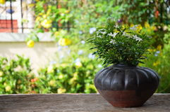Flowers in the pot and garden Stock Photography