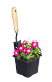 Flowers pot with garden tool isolated on white Royalty Free Stock Image