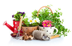 Flowers in pot with garden tools royalty free stock images
