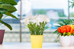 The flowers in the pot at home. Flowers in the pot at home royalty free stock photo