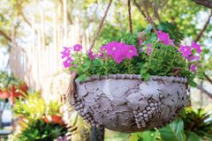 Flowers in pot with tree. royalty free stock image