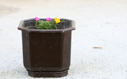 Flowers in a pot  on concrete back Stock Photo