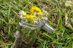 Flowers in a jar left in the grass. stock photos