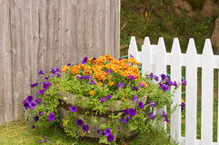 Free Flowers Pot Near Fences Royalty Free Stock Images - 11441019