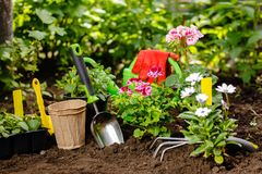 Flowers in pot before planting and some tools at summer garden.  Stock Photo