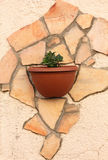 Flowers in pot on a wall Royalty Free Stock Photo