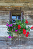 Flowers in a pot on a window Stock Photo