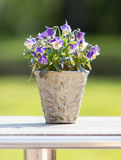 Flowers in pot Stock Photography