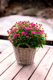 Flowers in a pot. On wooden table Royalty Free Stock Image