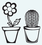 Flowers in pots. On blue background vector illustration