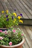 Flowers in pots Stock Photos