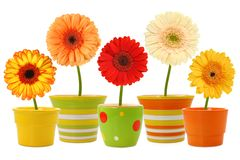 Flowers in pots stock photography