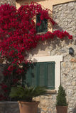 Flowers & pots. Red climbing flowers on house with green shutters Stock Photo