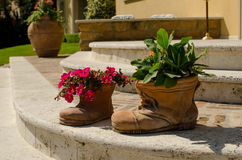 Flowers in pots as boot on the stair Royalty Free Stock Image