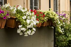 Flowers in pots decorate the wall. Of the balcony royalty free stock images
