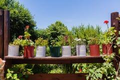 Flowers Pots Fence Stock Image