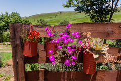 Flowers Pots Fence Royalty Free Stock Photos