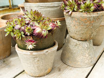 Flowers in pots Stock Image
