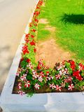 Flowers pots in front of house Stock Photo