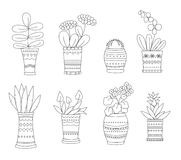 Flowers in pots Royalty Free Stock Image