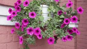 Flowers in pots stock video footage
